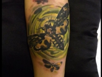 Татуировка мотылек на предплечье