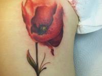 Татуировка красного мака на плече