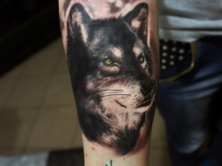 Татуировка голова собаки на предплечье