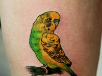 Татуировка попугайчик на бедре