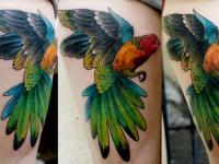 Татуировка попугай на бедре