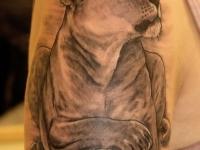 Татуировка львица на плече