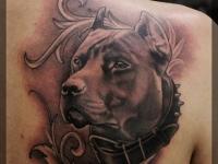 Татуировка голова собаки на лопатке