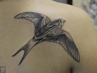 Татуировка ласточки на спине