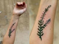 Цветная тату колючего растения на внутренней стороне предплечья
