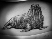 Татуировка тюлень