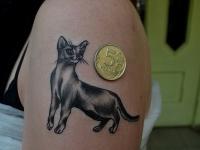 Татуировка кошка на плече