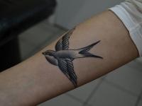 Татуировка ласточка на предплечье