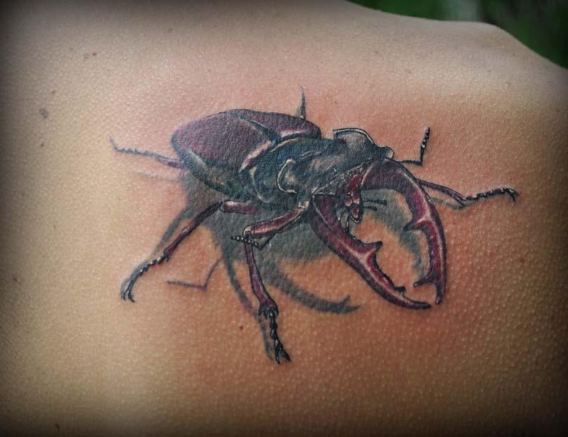 татуировка жука, татуировка, студия татуировки,маруха, салон