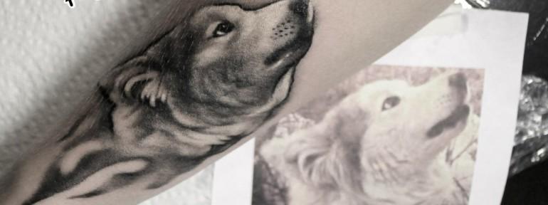 Художественная татуировка «Хаски». Мастер — Анна Корь