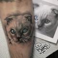 Художественная татуировка «Кошка». Мастер — Анна Корь. Расположение — предплечье. Время работы — 1,5 часа. По фотографии клиента.