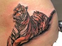 Татуировка на боку тигра отдыхающего