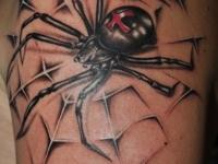 Татуировка паук в паутине на плече