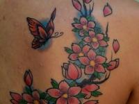 Татуировка сакура с бабочкой на лопатке