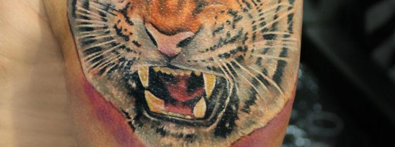 Художественная татуировка «Тигр»  от Жени Химика